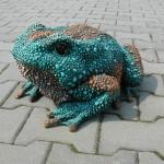 veľká žaba
